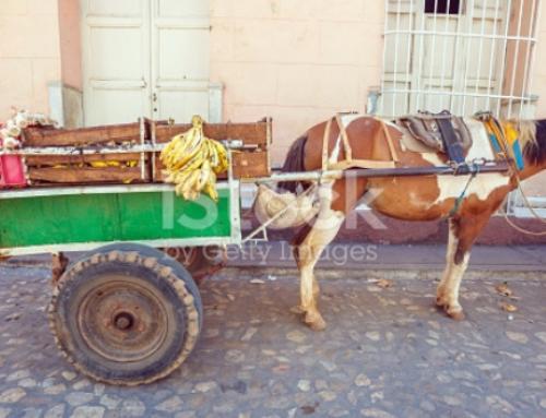 Decomisan productos agrícolas a trabajadores por cuenta propia en Trinidad